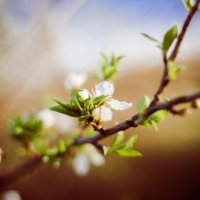 are-you-prepared-for-spring-picjumbo-com